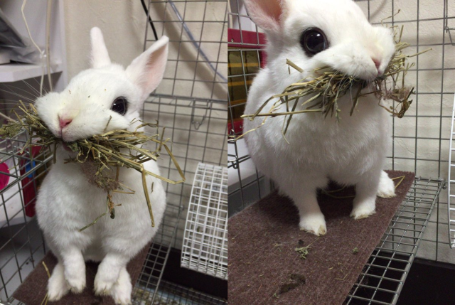 Adorably derpy bunny melts even the most frigid hearts on Japanese Twitter 【Pics】