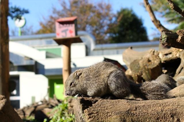 Machida Squirrel Garden: Tokyo's tiny zoo for equally tiny critters【Photos】