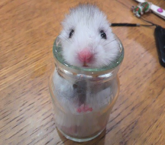 2015: The year Japan fell in love with the hamster 【Photos】
