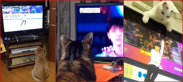 Japan's cats are figure skater Yuzuru Hanyu's biggest fans【Pics】