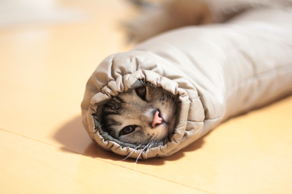 Sleeve cats are taking over the internet in Japan this winter