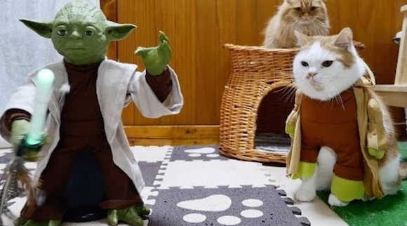 The Force doesn't awaken amongst cats, despite Yoda's best efforts【Video】