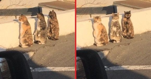 Cats pretending to be humans get caught in the act, give adorable synchronized reaction
