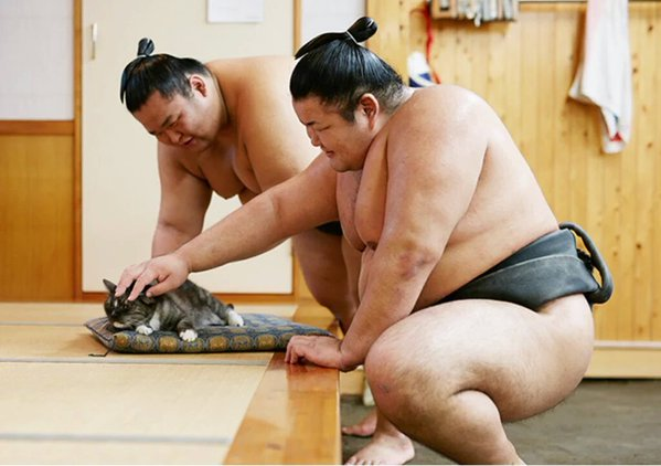 """""""Kawaigari"""": Learn this depressing sumo jargon while enjoying photos of wrestlers with cats!"""