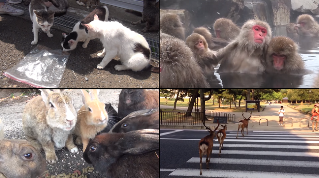 Looking to get your cute animal quota in Japan? Check out these five locations!【Video】