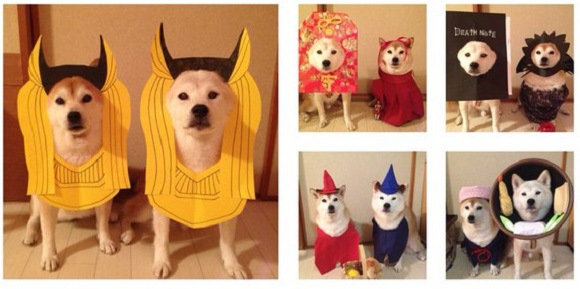 Cosplaying dog duo are back with even more costumes, cuteness and, instant coordination【Photos】