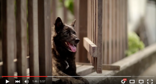 "This Thai ad is making the internet cry with its ""Hachiko-like"" story【Video】"
