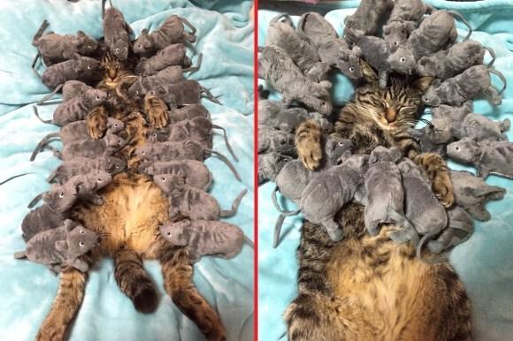 sleeping cat top