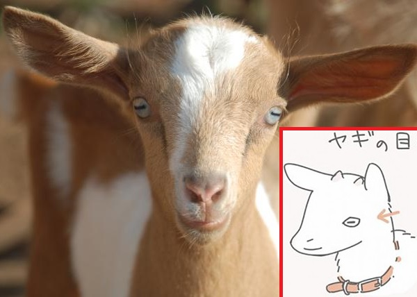 Twitterer explains cool factoid about goat eyes with cute illustration, blows internet's mind