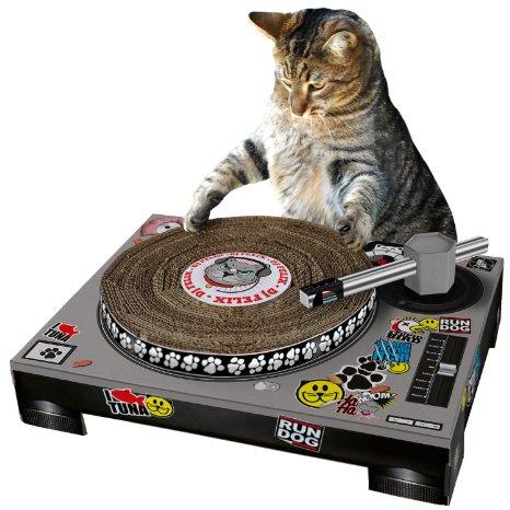 amazon cat store 04