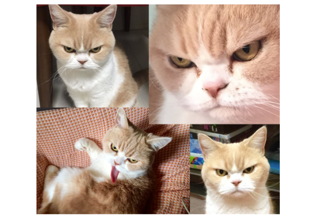 Move over, Grumpy Cat, you've got competition in Japan!