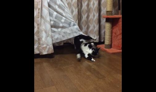cat curtains 02