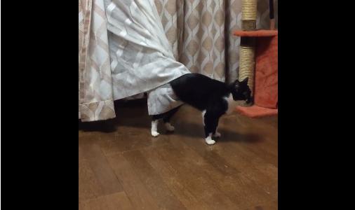 cat curtains 03