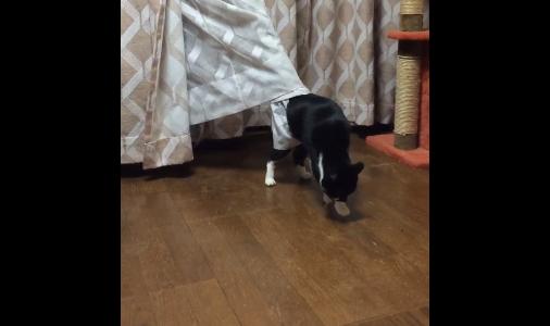 cat curtains 04