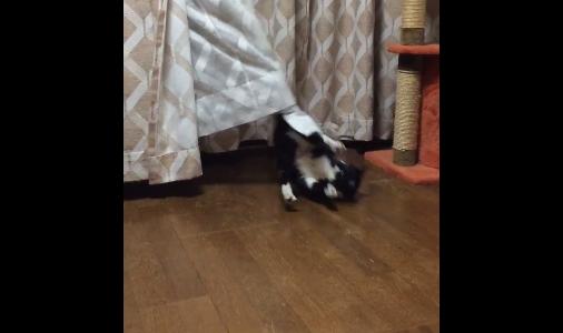 cat curtains 05