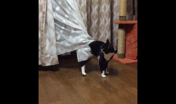 cat curtains top