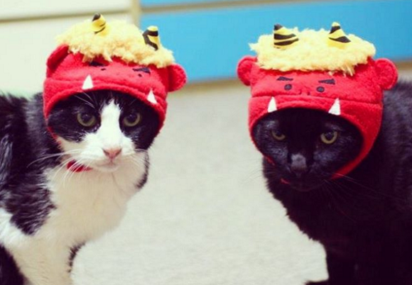 Japanese cats channel their inner demon during the chilly month of February