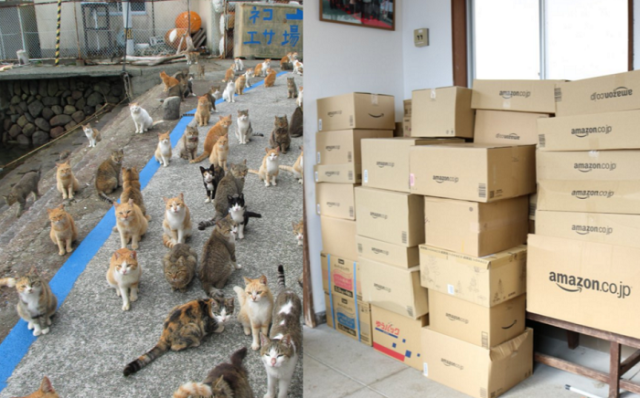 Japan's Cat Island tweets a plea for cat food, gets so much they can barely store it all