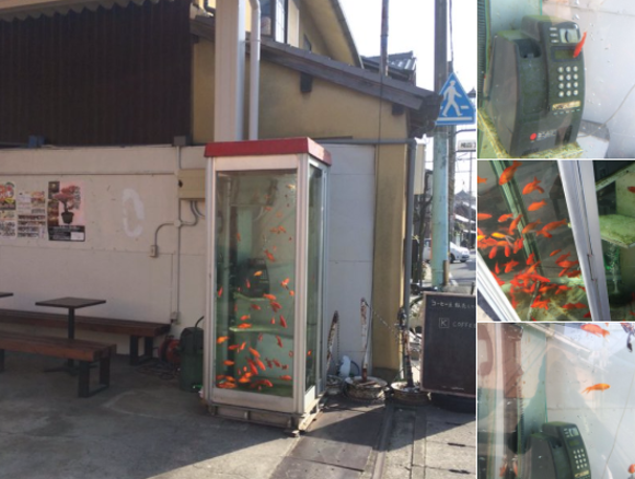 Unusual fish tanks lure visitors to old Japanese shopping district in Nara Prefecture
