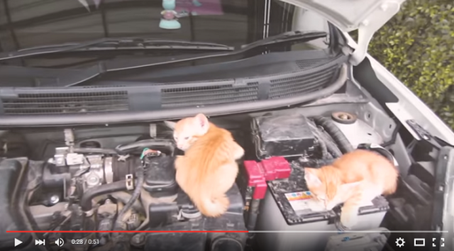 Nissan reminds us to check for sleeping cats before starting cars with adorable montage【Video】