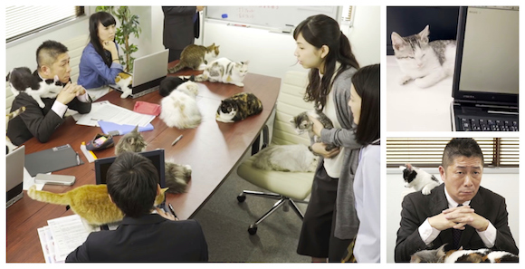 Japanese commercial shows off blissful world where cats outnumber people at the office【Video】