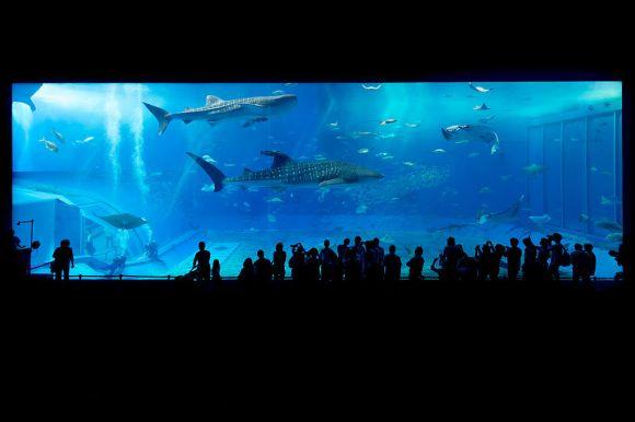 Okinawa_Aquarium