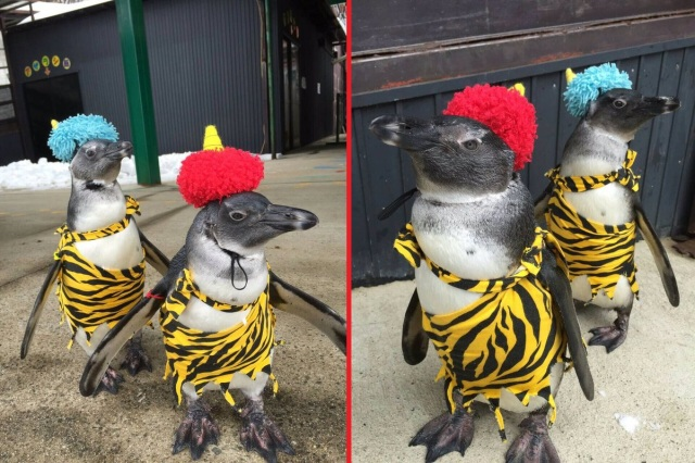 Red Oni and Blue Oni penguins at Tohoku Safari Park bring good luck and cuteness to guests