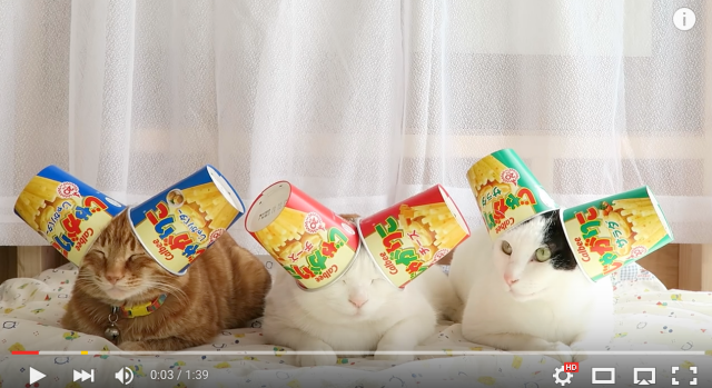 More cute kitties balancing Japanese snacks on their heads【Videos】