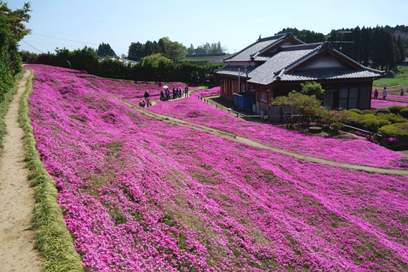 Man creates a glorious garden of scented flowers to make his blind wife smile again