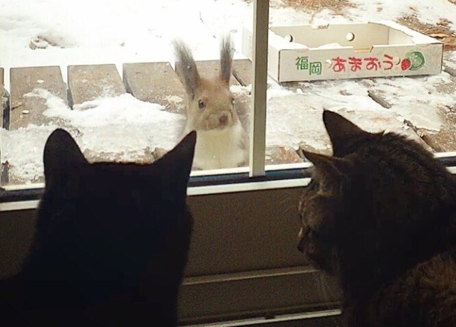 Hyperactive squirrels have captured the attention of Twitter users…and these two cats!【Video】