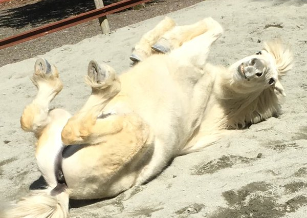 """Nara Prefecture's """"god horses"""" caught acting in a decidedly ungodly manner…【Pics】"""
