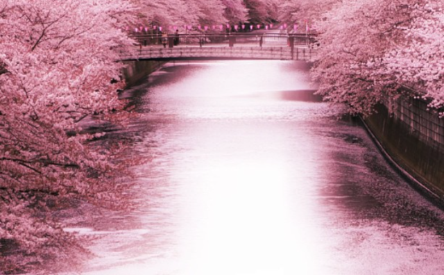 """It's almost time for Japan's """"flower rafts,"""" one of the most beautiful parts of sakura season"""