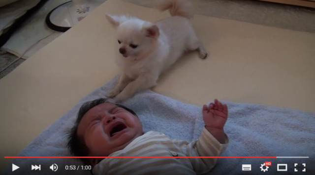 This dog has so much love for his human baby housemate that it's making us cry 【Video】