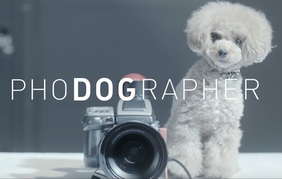 Dogs photograph their owners with beautiful, heartwarming results