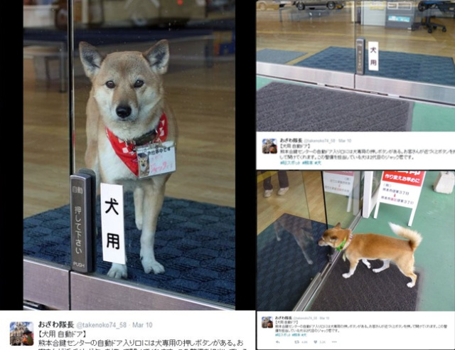 "Kumamoto shop has automatic door control for ""guard"" dog so he can take pee break【Video】"