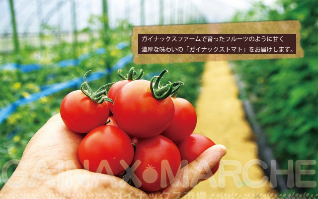 Evangelion's Gainax studio establishes new business… cultivating tomatoes