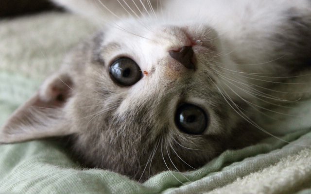 Tokyo government orders cat cafe to shut down for violating animal welfare regulations
