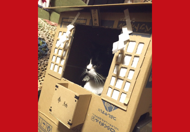 If you're going to worship your cat, you may as well make him a cardboard box Shinto shrine