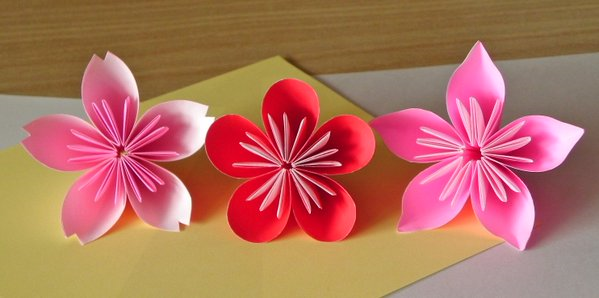 Beyond sakura: How to tell a cherry blossom from a plum or peach flower