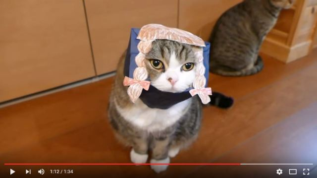 Maru the cat sticks his head in a bag, emerges with fashionable pigtails【Video】