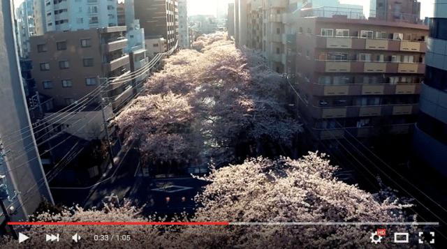 This drone-shot bird's-eye video of Tokyo's sakura is absolutely stunning 【Video】