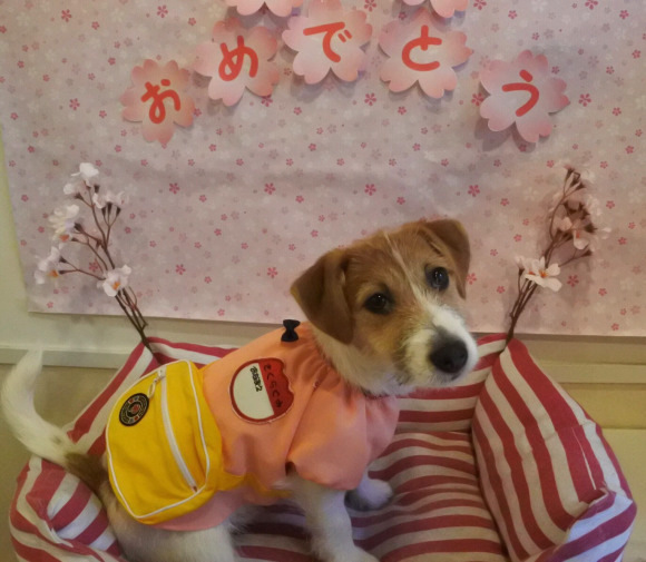 "Japanese dog hotel and groomer opens adorable ""puppy pre-school""【Photos】"
