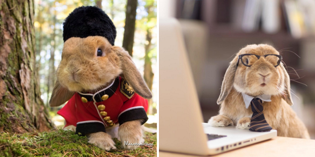 """World's most stylish rabbit"" is the Instagram account you should be following right now【Photos】"