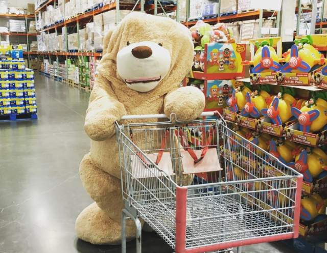 RocketNews24's giant teddy bear goes looking for some new friends at Costco Japan 【Photos】