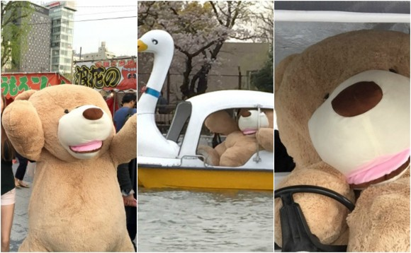 Bears over flowers: The RocketNews24 giant bear takes an Ueno Park swan boat for a spin