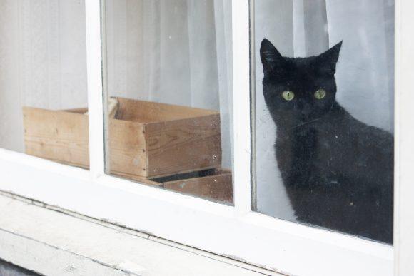 Almost half of Japanese people hide when their doorbell rings — here's why