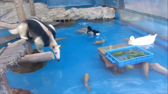 anteater pool 02