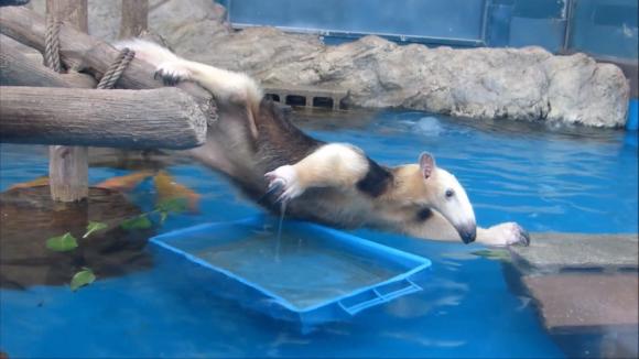 anteater pool 07