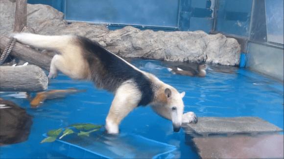 anteater pool 10