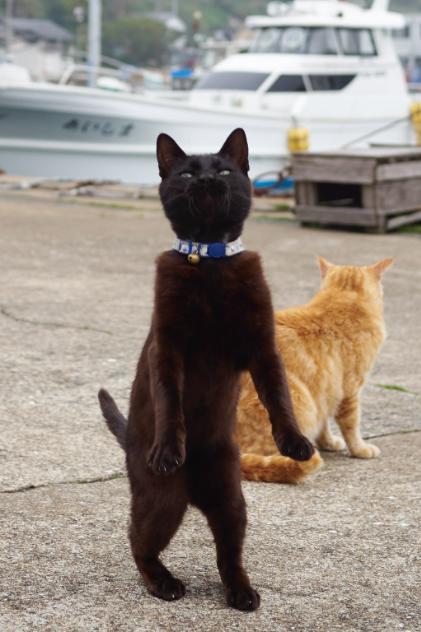 blackcat6